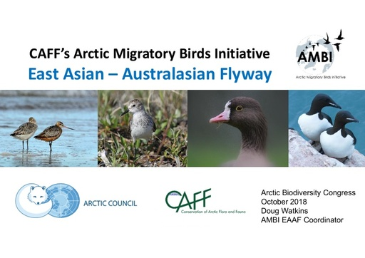 AMBI work in the most threatened flyway on the planet - East Asian Australasian Flyway: Doug Watkins