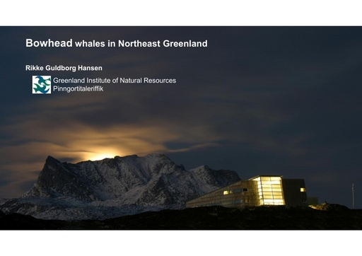 Abundance and distribution of bowhead whales during winter and summer in the Greenland Sea: Rikke Guldborg Hansen