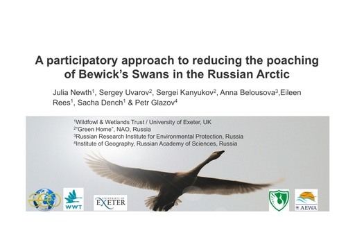 A participatory approach to reducing the poaching of Bewick's swans in the Russian Arctic: Julia Newth