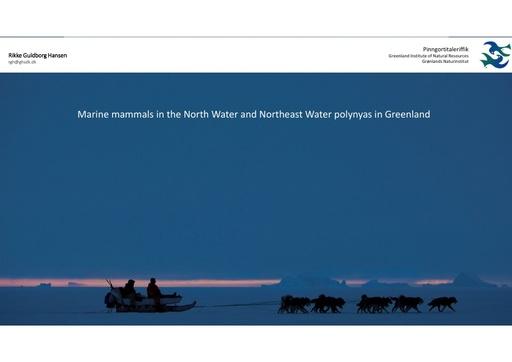 Abundance and distribution of marine mammals wintering in the North Water and Northeast Water polynyas in Greenland: Rikke Guldborg Hansen