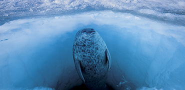 Paul Nicklen 1065740 370180