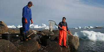 Fishing for capelin, Ilulissat Greenland. Photo: Carsten Egevang/ARC-PIC.com