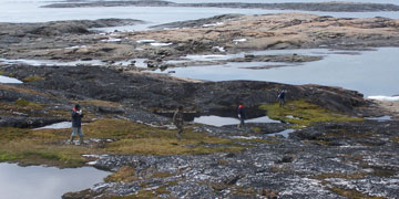 Local community members walking transect line for eider monitoring. Photo: Samuel Iverson