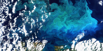 Plankton bloom in the Barents Sea. Photo: Envirisat, European Space Agency