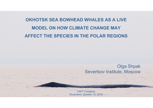 Okhotsk Sea bowhead whales as a live model on how climate change may affect the species in the polar regions: Olga Shpak