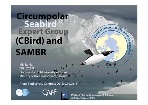 SAMBR and CBird: Mia Rönkä