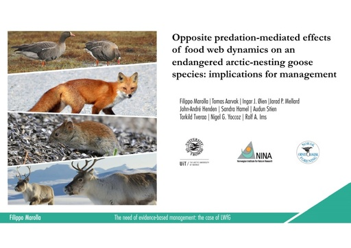 Opposite predation-mediated effects of food web dynamicson an endangered arctic-nesting goose species: implications for management: Filippo Marolla