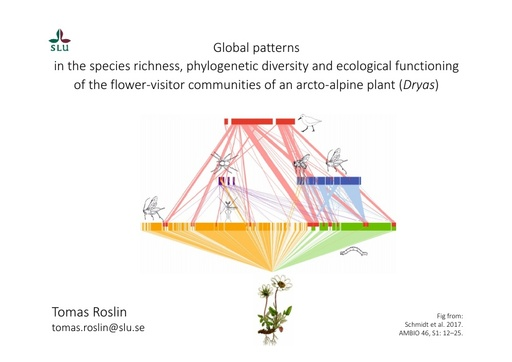 Global patterns in the species richness, phylogenetic diversity and ecological functioning of the flower-visitor communities of an arcto-alpine plant (Dryas): Tomas Roslin
