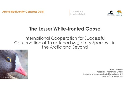 International Cooperation for Successful Conservation of Threatened Migratory Species in the Arctic and Beyond - the Story of the Lesser White-fronted Goose: Nina Mikander