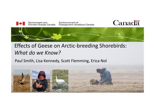 Effects of overabundant geese on shorebirds breeding in Arctic Canada: Paul Smith