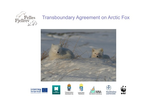 Trans-boundary management of Arctic fox: Tom Arnbom