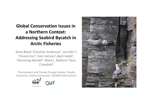 Global Conservation Issues in a Northern Context: Addressing Seabird Bycatch in Arctic Fisheries: Amie Black