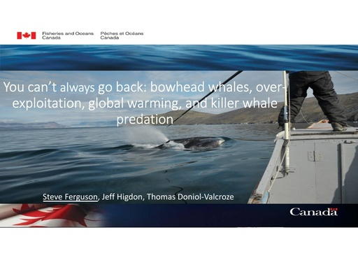 You can't always go back: bowhead whales, over-exploitation, global warming, and orca predation: Steven Ferguson