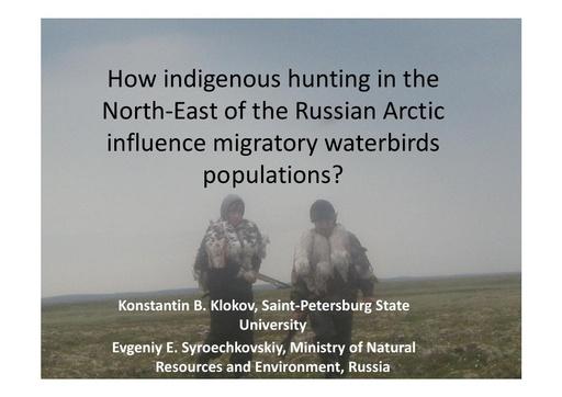 How aboriginal hunting in the Northeast of the Russian Arctic influences migratory waterbird population? Konstantin Klokov