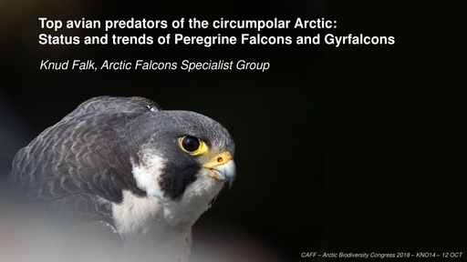 Trends in Arctic falcon populations – a preliminary overview for CAFF's Circumpolar Biodiversity Monitoring Programme: Knud Falk