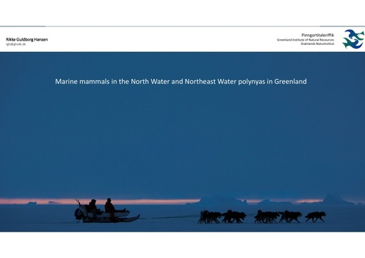 Abundance and distribution of marine mammals wintering in the North Water and Northeast Water polynyas in Greenland: Rikke Guldborg Hansen